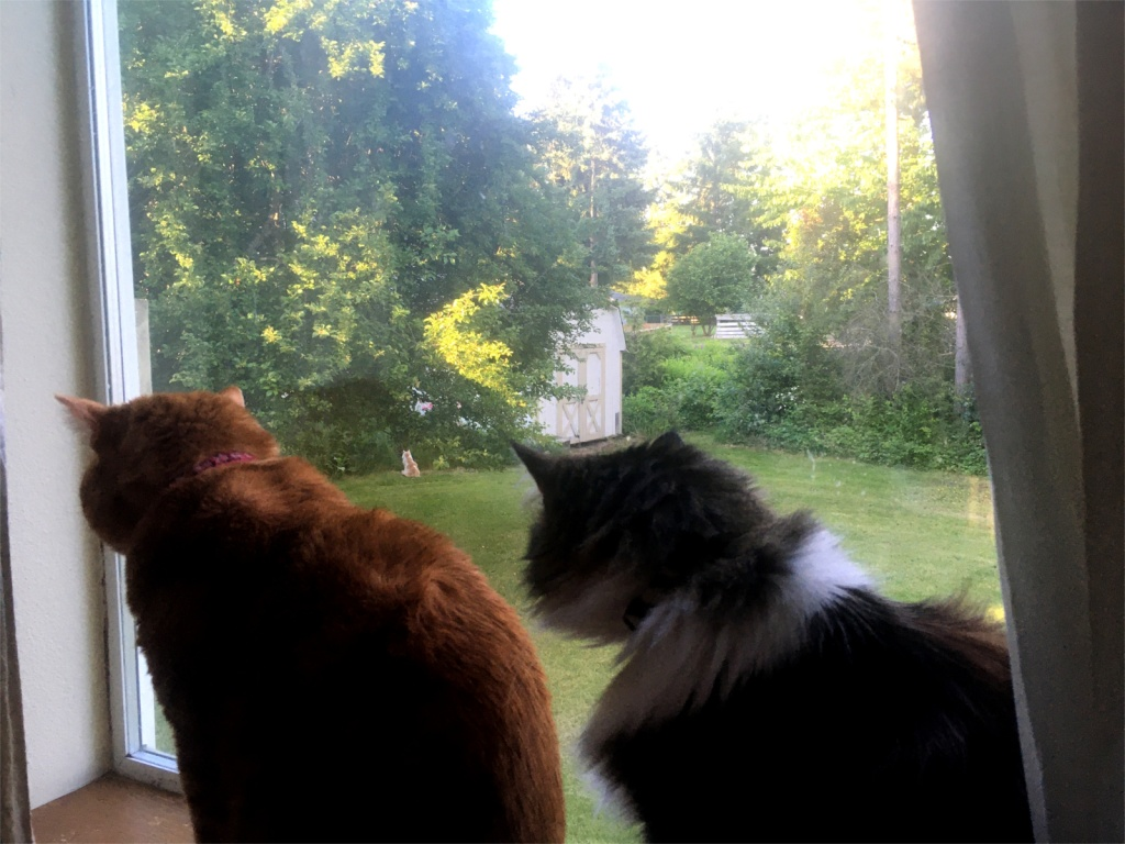 cats in window watching cat