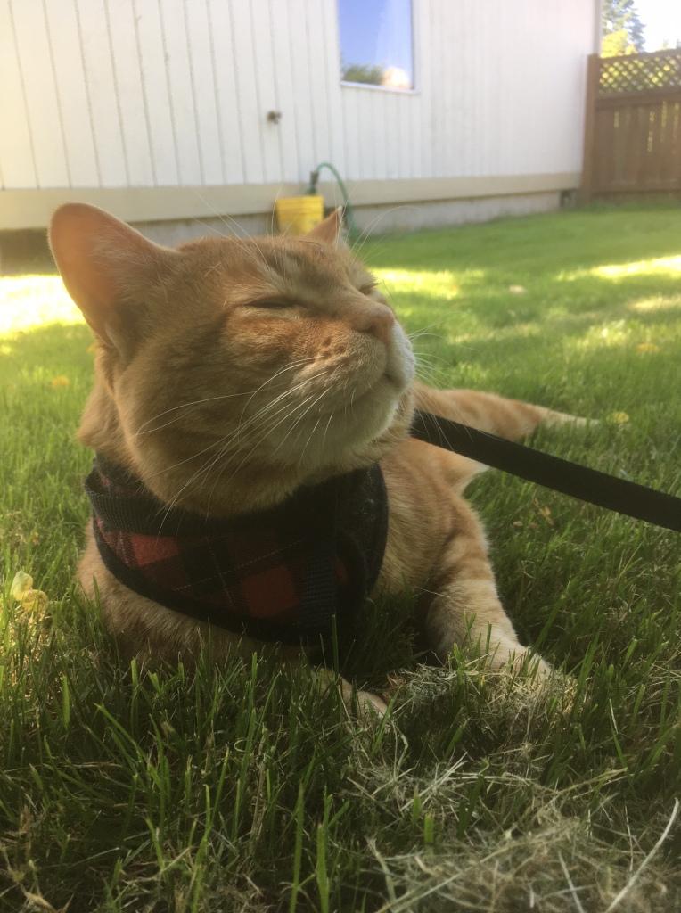 scooby outside