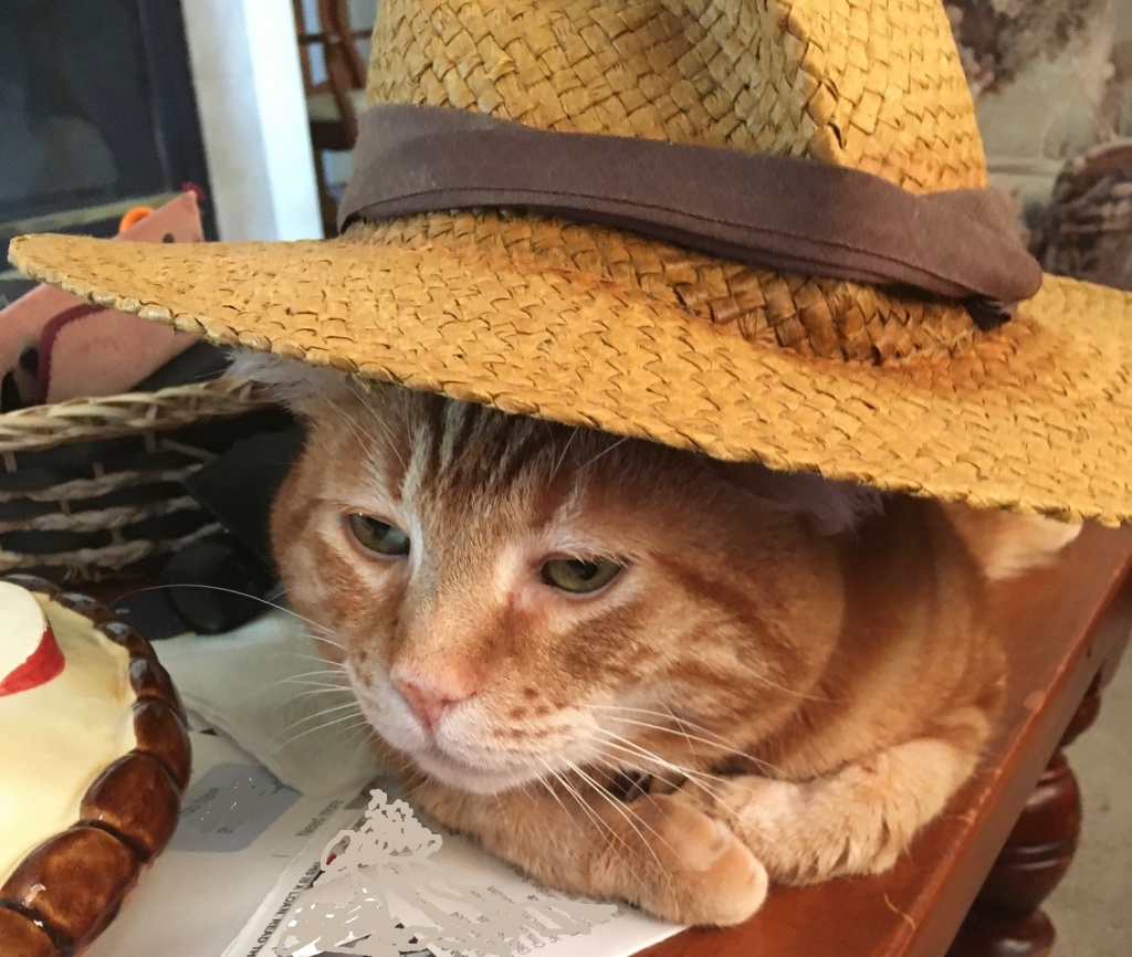 Scooby in hat