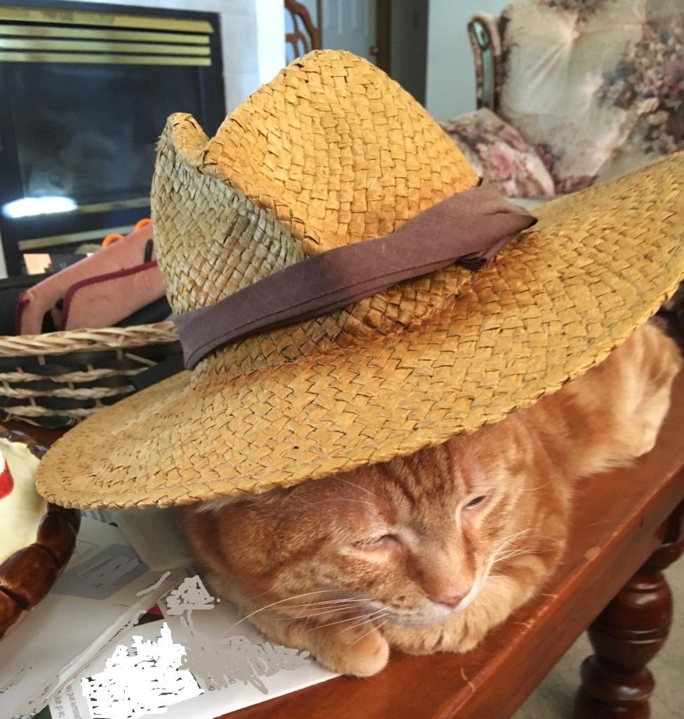 Scooby sleeping in hat