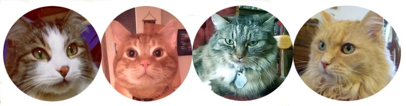 4 cat header