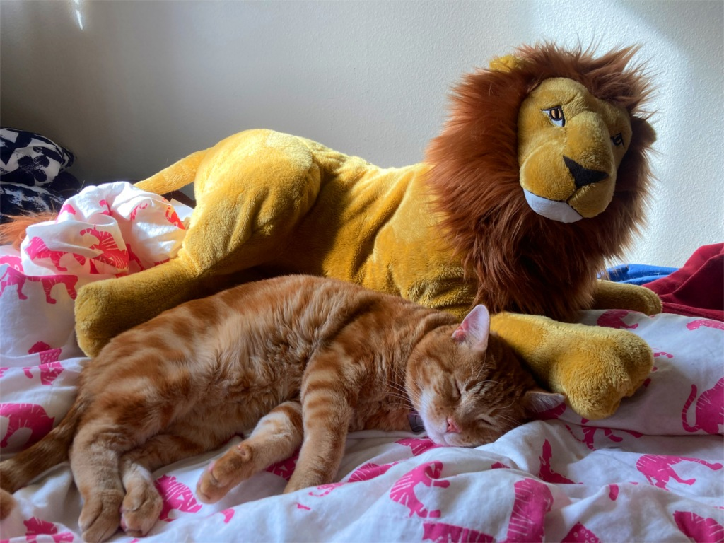 Scooby and Lion